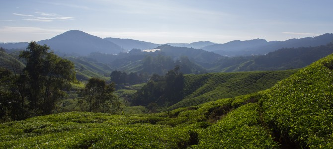 Cameron Highlands in a nutshell